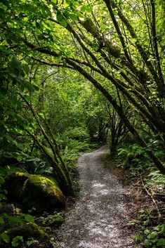 Whatcom Falls Park, Bellingham, Washington photo via devon Park Trails, Hiking Trails, Forest Path, All Nature, Walk In The Woods, Nature Scenes, Adventure Is Out There, Pathways, Beautiful Landscapes