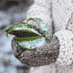Velvet Acorn, Green Christmas, Winter Garden, Frost, Instagram, Design, Cottage, Dots