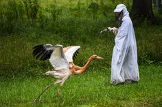 Animal care technician Kathryn Nassar wears a costume and holds a crane puppet as she interacts with a 2-month-old whooping crane. (Salwan Georges/The Washington Post)