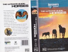THE ULTIMATE GUIDE HORSES VHS VIDEO PAL~ A RARE FIND~ VHS VIDEO PAL~. THE ULTIMATE GUIDE HORSES. VHS VIDEO PAL. VHS PAL VIDEO. A RARE FIND.   eBay!