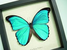 Mother's Day Gift Sealed Conservation by REALBUTTERFLYGIFTS, $79.99