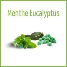 Menthe Eucalyptus - Arômes naturels - Fiole de 10ml - PG/80 VG/20