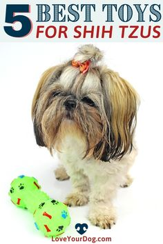 Looking to find the perfect dog toy for your little Shih Tzu? In this comprehensive guide, we review our favorite toys for your pint-sized canine companion at each life stage! Come check it out! Potty Training Tips, Best Dog Training, Brain Training, Big Dog Little Dog, Big Dogs, Puppies Tips, Dogs And Puppies, Train Information, All Types Of Dogs