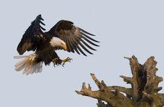 Wildlife Photography: Dennis Binda