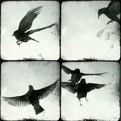 "Ingrid Art Studio. Birds in flight - four 5""x5"" prints, via Etsy."