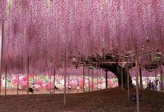 https://www.facebook.com/forallthelittlecouplefans/ Japanese-Wisteria-Tree  https://www.leddancefloor.info