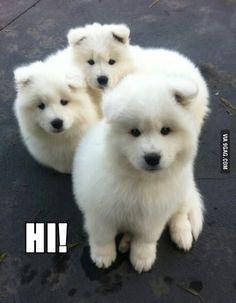 Hi, adorable puppies