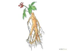 How to Hunt for Wild Ginseng: 7 Steps (with Pictures) - wikiHow