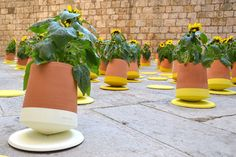 This innovative flower pot can be rolled to follow the sunlight - Lost At E Minor: For creative people