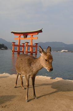 Miyajima @Hiroshima prefecture