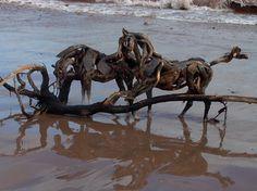 Driftwood horses.