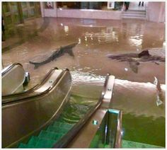 An Aquarium on a mall burst and left sharks swimming around! Glad I wasn't there when it happened! Must have been one hell of an aquarium for water to be that deep!