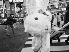 Tatsuo Suzuki Photography — Shibuya,Tokyo