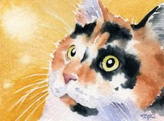 CALICO CAT Watercolor Signed Fine Art Print by Artist DJ Rogers