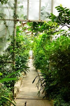 Greenhouse, overgrown perfection