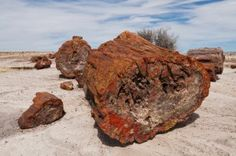 """Bad Luck, Hot Rocks: Stories Behind the """"Cursed"""" Thieves of Petrified Forest"""