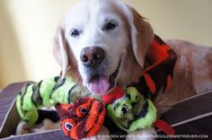 #Woofs2BeSnakeCharmers IG Contest