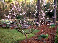 Planning a Small Home Orchardhttp://www.garden.org/ediblelandscaping/?page=201004-home-orchard
