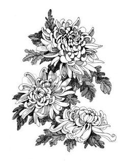 Hand drawing chrysanthemum flower vector illustration - buy this vector on Shutterstock & find other images. Chrysanthemum Drawing, Japanese Chrysanthemum, Chrysanthemum Flower, Japanese Flowers, Tatoo Flowers, Peonies Tattoo, Flower Tattoos, Bird Drawings, Tattoo Drawings