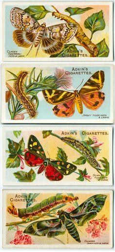 Adkin's cigarette cards | Butterflies & Moths