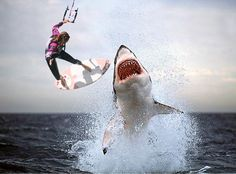 Are Sharks Mammals or Fish? [The Complete Answer All about Sharks Fact] - NvH All About Sharks, All Sharks, Orcas, Cool Pictures, Animal Pictures, Shark Pictures, Funny Pictures, Wow Photo, Big Wave Surfing