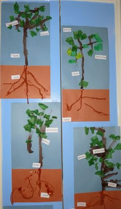 Paula's Preschool and Kindergarten: an original craft, yarn roots, painted trunk and branches, tissue paper leaves, label parts of trees.
