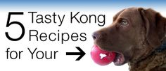 6 Tasty Kong Recipes for Your Dog- can't wait to try some of these to keep Lillibet busy!!!!!