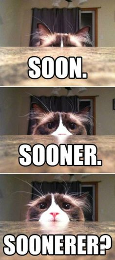 funny-animal-pictures-with-captions-008-010.jpg 600×1,352 pixels