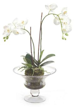 "Pure colors stand out in Nature's Beauty, as white orchids and lush greenery highlight an arrangement ""planted"" in a clear glass compote."