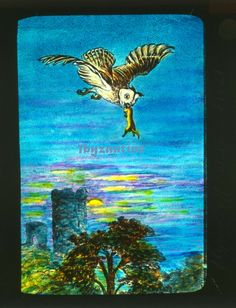 Owl Long Eared hunting carrying stoat Lantern Slide c1900 Hand coloured Birds Hand Coloring, Lanterns, Moose Art, Hunting, Owl, Birds, Ebay, Owls, Lamps