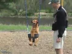 Dog in Swing- The dog looks like he is having so much fun. Such a cute video.