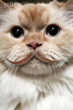 Le chat de Dali s'est fait une moustache! lol