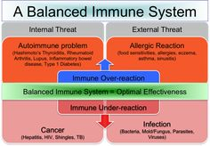 Balance is Key to a Healthy Immune Response - DrJockers.com