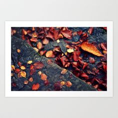 On the ground by Annie Japaud on Annie, Art Prints, Flowers, Photography, Painting, Autumn, Image, Art Impressions, Photograph