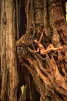 Western Redcedar – Thuja plicata - Treegirl: Intimacy with Nature