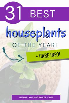 Are you looking to get into houseplants? Are you searching for just the right one? Check out this list of the 31 Best Indoor Plants of 2021 to figure out which one is right for you! Indoor Plants | Houseplants | Houseplants Decor | Indoor Plant Care | Best Indoor Plants, Air Plants, House Plants Decor, Plant Decor, Apartment Plants, Low Lights, Plant Care, Houseplants, Diy Design