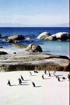Simon's Town Boulder Beach, Snorkeling, Bouldering, Penguins, Colonial, South Africa, Trip Advisor, Hiking, Waves