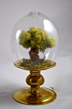 Tree terrarium with hand sculpted miniature tree. by UniqueLeeArt