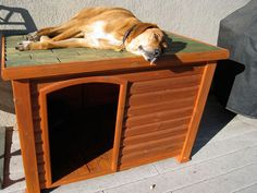 A basic flat-roofed dog house might be a good early DIY project for us...flat roof is necessary for the dog who likes to be up high!