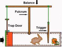 Folcrum rabbit trap