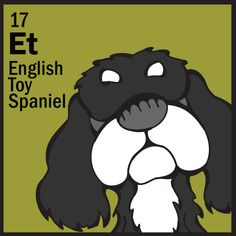 English Toy Spaniel   http://www.thedogtable.com/the-dog-table/toy/english-toy-spaniel/