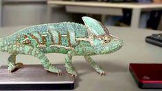 #Хамелеон меняет цвет! #Chameleon changes color!