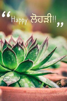 Succulents, Happy, Plants, Succulent Plants, Planets, Being Happy