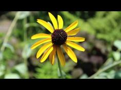 Compassionate Body Scan - 20 Minute Guided Meditation - YouTube
