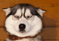 This is the face I'm going to send to everyone that annoys me.