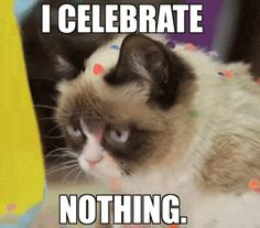 Find GIFs with the latest and newest hashtags! Search, discover and share your favorite Happy Cat GIFs. The best GIFs are on GIPHY. Grumpy Cat Quotes, Grumpy Cat Gif, Grumpy Cat Humor, Grump Cat, Cat Memes, Cat Qoutes, Meme Gifs, Cat Birthday Memes, Grumpy Cat Birthday