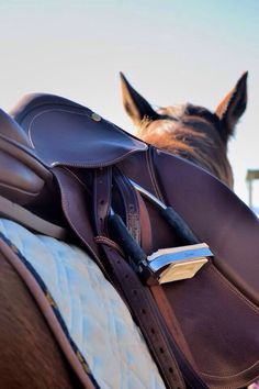 saddle // a place where nothing matters but the strides ahead {childhood memories} @Leann Revels