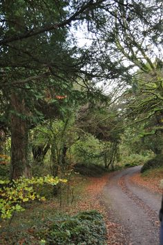 Forest Pathway in Killarney National Park