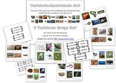 Vertebrate-Invertebrate-Sort --5 Vertebrate Groups Sort