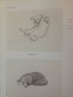 David Hockney dog sketches